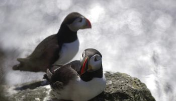 Puffin tour by Special Tours