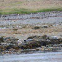 Seal Watching Hvammstangi