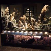 The Sigurgeirs Bird Museum